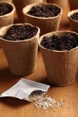 Lettuce seeds and planting pots — Stock Photo