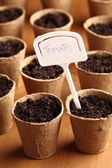 Turf pots with seeds — Stock Photo