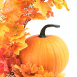 Pumpkin and colorful autumn leaves — Stock Photo
