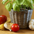 Fresh basil in flowerpot, pasta tomatoes and garlic. — Stock Photo #27079233