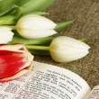 Bible opened and bunch of tulips. — Stockfoto