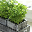 Wooden box with parsley and lemon balm — Stock Photo #27202097
