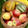 Basketful with apples and gourds in the garden. — Stock Photo