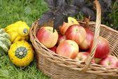 Koszyk z jabłek i melony, rosliny basztanowe w ogrodzie. — Zdjęcie stockowe