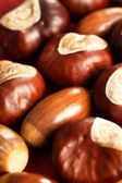 Close-up of chestnuts and acorns. — Stock Photo