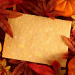 Autumn or thanksgiving greeting card — Stock Photo #27497055