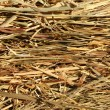 Close up of straw — Stock Photo