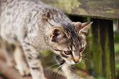 Detail kočky podél plotu — Stock fotografie