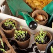 Stock Photo: Detail of seedlings, bulbs and garden equipment.