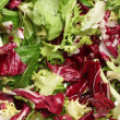 Stock Photo: Close-up of fresh mixed lettuces background