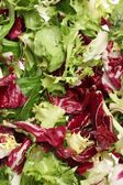 Close-up of fresh mixed lettuces background — Stock Photo