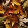 Colorful autumn leaves on wooden background — Stock Photo