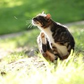 Scratching cat int the garden — Stockfoto