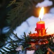 Candle on tree branch in he winter garden — Stock Photo