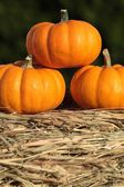 Pumpkins on straw. — Stock Photo