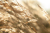 Dry grass in sunny day — Stock Photo