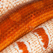 Two snakes skin — Stock Photo