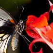 Butterfly on a flower close-up — Stock Photo