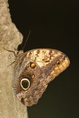 Butterfly on tree bark — Stock Photo