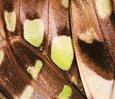 Fondo de ala de mariposa — Foto de Stock