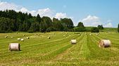 フィールドで干し草の山 — ストック写真