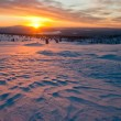 Sunset in the tundra — Stock Photo