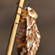 Brown butterfly on the stem — Stock Photo