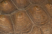 Detail shot of a turtle shell — Stock Photo