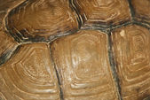 Tortoise shell  background — Stock Photo