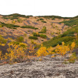 Kamchatka tundra landscape. — Stock Photo