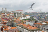 Seagull flying over the historic center of Porto Portugal — Stock Photo