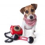 Dog with retro phone — Stock Photo