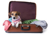 Dog lying in a suitcase for traveling — Stock Photo