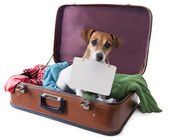 Dog in a suitcase with a tablet on his chest where you can place your text — Stock Photo