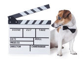 Movie video star animal — Stock Photo