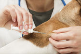 Vet and Dog with Microchip implant — Stock Photo