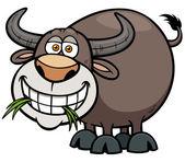 Buffalo — Stock Vector