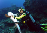 Hypnotising a nurse shark — Stock Photo