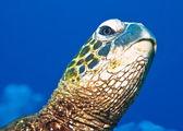 一只乌龟的肖像 — 图库照片