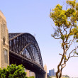 Sydney bridge and eucalyptus tree — Stock Photo