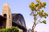 Sydney bridge and eucalyptus tree — Stock Photo