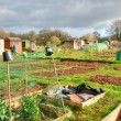 Vegetable allotments — Stock Photo