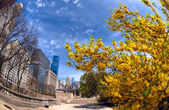 Michigan avenue in the spring — Stock Photo