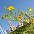 Stock Photo: City garden
