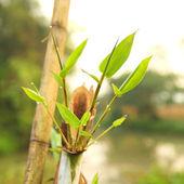Bamboo garden — Stock Photo
