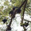 Stock Photo: Bats on tree