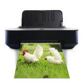 Printer and picture with White bantam — Stock Photo