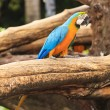 Macaw birds — Stock Photo #28547445