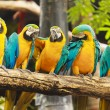 Macaw birds — Stock Photo #28547559