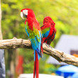 Macaw birds — Stock Photo #28548145